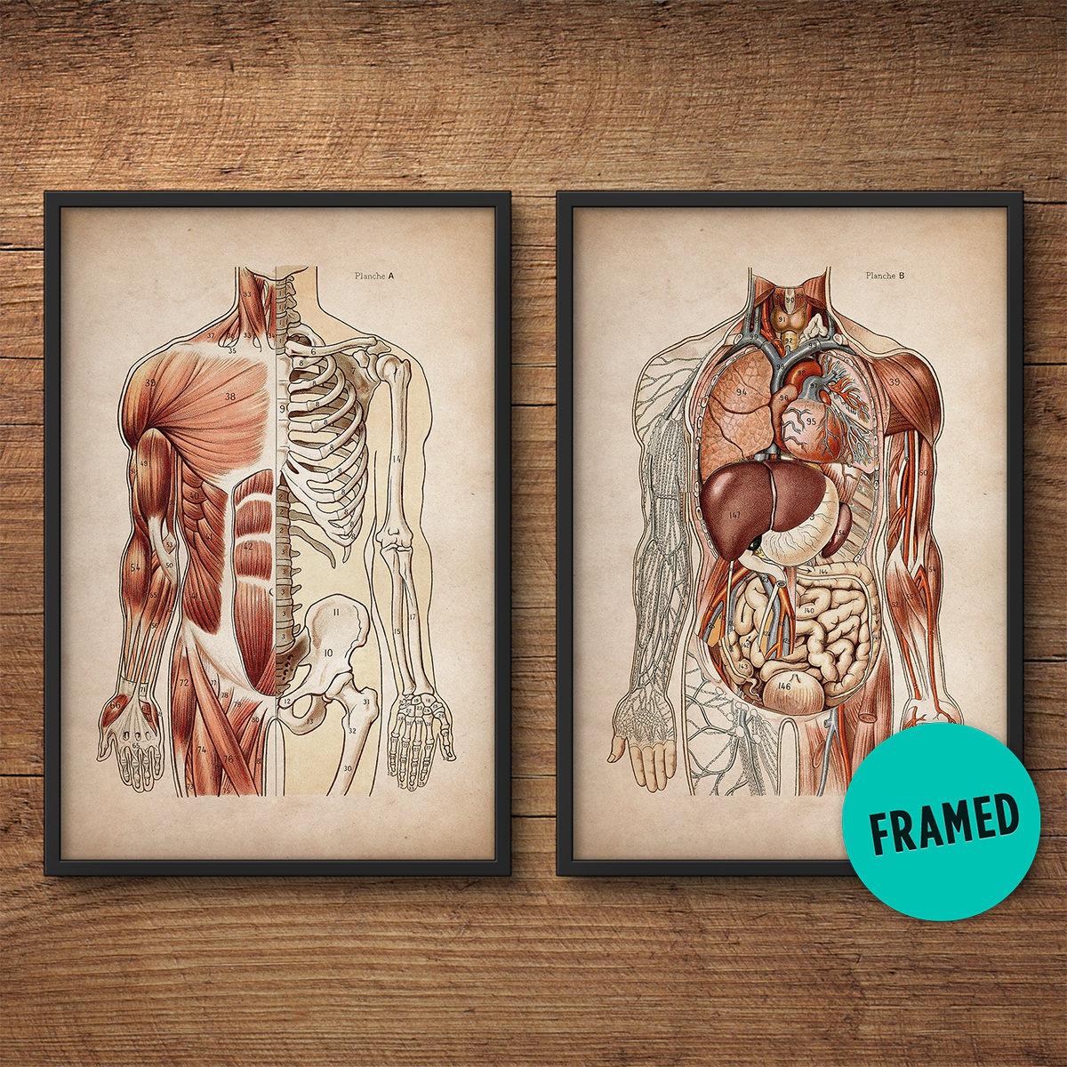 Gerahmte Anatomie Druck Satz von 2 gerahmte Kunst Anatomie   Etsy
