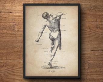 Human anatomy print, Medical student gift, Anatomy poster gift, Anatomy art decor, Human anatomy poster, Anatomy decor, Human male print