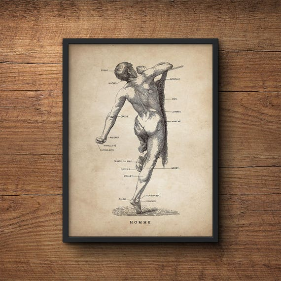 Anatomía humana imprimir regalo de estudiante de medicina