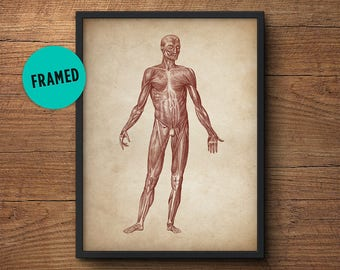 Anatomy poster, Framed art, Anatomy print, Muscular system print, Human anatomy poster, Medical print, Anatomical drawing, Human anatomy