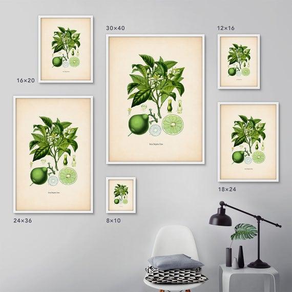 Framed botanical print set Citrus framed art Botanical   Etsy