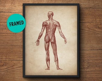 Anatomy print, Framed art, Anatomy poster, Muscular system print, Human anatomy poster, Medical print, Anatomical drawing, Human anatomy