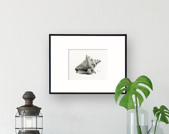 Seashell Art Illustration, Fine Art Print Giclee, wall art for beach décor, Coastal Home, Black and White Art