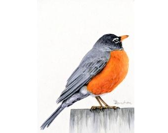 Robin Painting,  Watercolor Bird Art, Framed wall art for Farmhouse décor, American Robin Original Art for Bird Lovers