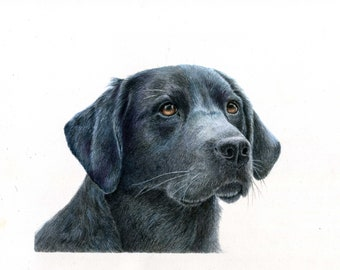 Custom Pet Portrait, Colored Pencil Drawing, matted and framed, various sizes available