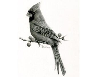 Cardinal Illustration,  Charcoal Bird Art, Framed wall art for Farmhouse décor, Northern Cardinal Original Art for Bird Lovers