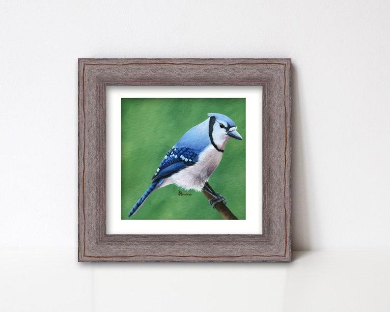 Blue Jay Print Bird Art Fine Art Giclee Square Artwork for image 0
