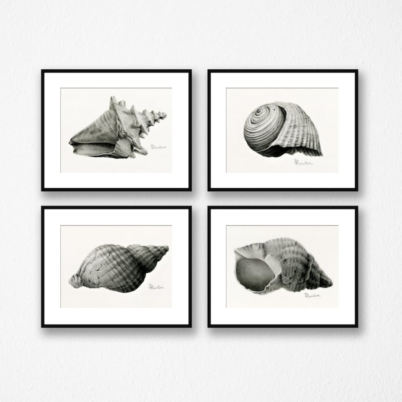Seashell Art Illustration Set of 4 Fine Art Print Giclee image 0