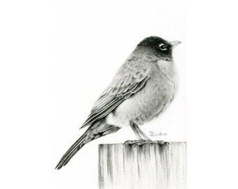Robin Illustration,  Charcoal Bird Art, Framed wall art for Farmhouse décor, American Robin Original Art for Bird Lovers