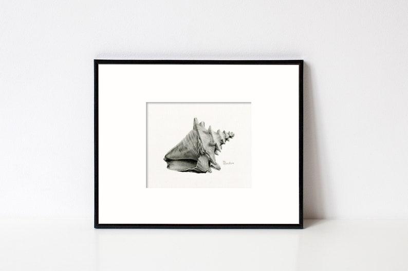 Seashell Art Illustration Original Charcoal Drawing Framed image 0