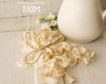 Seam Binding Crinkle Ribbon Vintage Aged white/cream - Sewing- Crafts - Gift Wrap - Trim - 5 yards