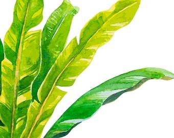 Banana Leaf Tropical Print