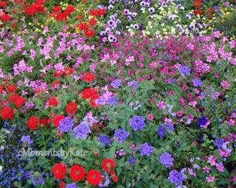 Flower Garden with Reds