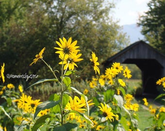 Flowers and a Covered Bridge