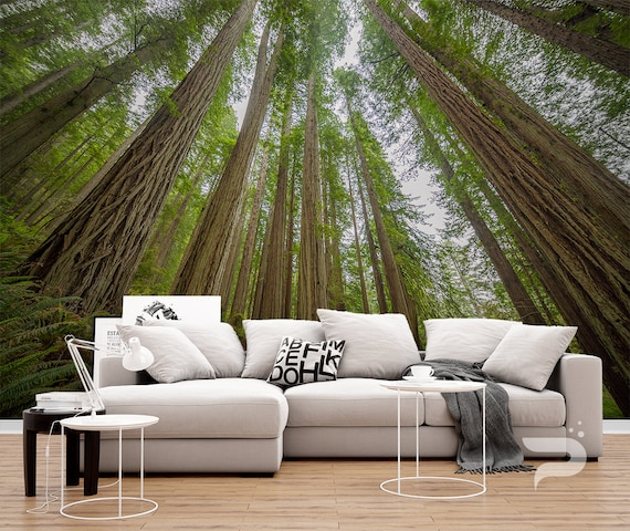 Sequoia Forest Mural Giant Trees Wallpaper Redwood Wall Mural Large Mural Sequoia National Park Wall Decor Removable Peel Stick Mural
