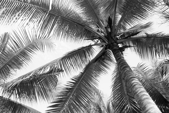 Black And White Wall Mural Palm Tree Wallpaper Large Wall Mural Self Adhesive Peel Stick Photo Mural Bw Beach Holiday Wall Covering