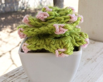 Crocheted Hens and Chicks Succulent