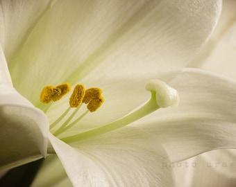 Floral Print, Nature Print, Printable Wall Art, Botanical Decor, Floral Photo, Flower Garden, Home Decor, Popular, Printable Flower Photo