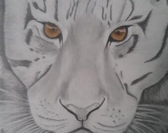 White Tiger, amber eyes