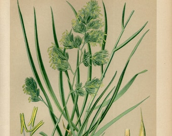 Cat Grass Kitchen Wall Art  0512 Cock/'s Foot Botanical Plant Illustration Poster