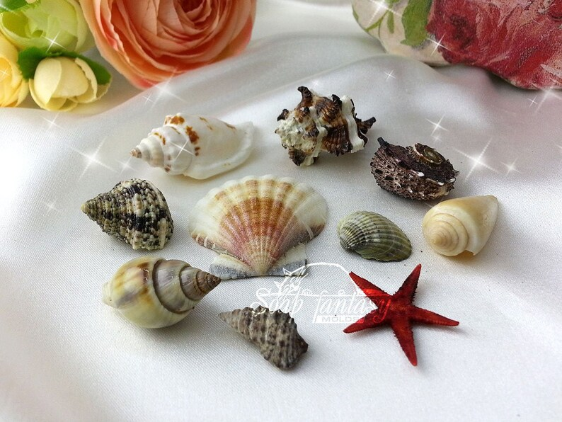 Seashell mini set silicone soap mold for soap making Maked from high quality silicone