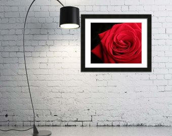 Red Rose Photograph, red rose download, red rose photo, red rose wall art