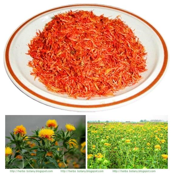 Carthamus Flower Organic Safflower Tea Carthamus Tinctorius Etsy