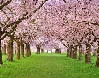 160 cm x 300 cm / 5'x10' Blossom trees  Photo Backdrop