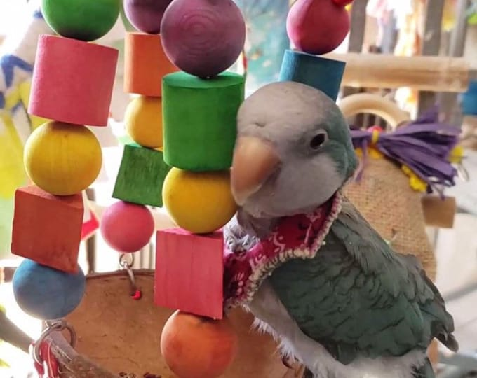 Featured listing image: Bernie's CocoHut for small to medium parrots
