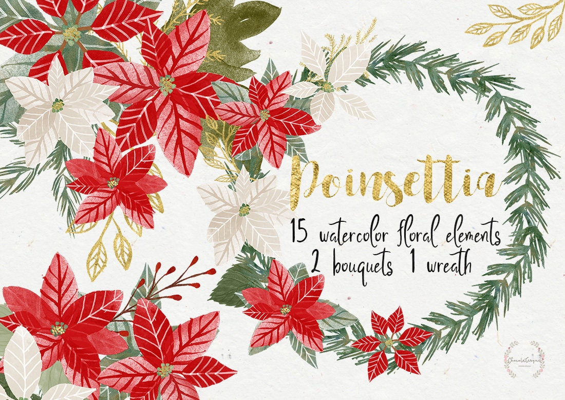 Weihnachtsstern Weihnachtsstern Clipart Sterne Blumen | Etsy