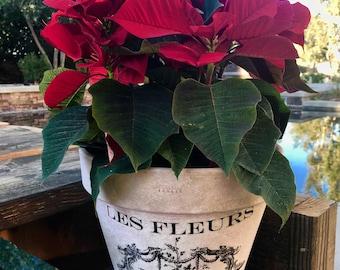 French flower pot
