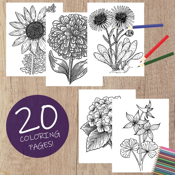 Floral Coloring Pages for Adults Teens and Kids  Realistic