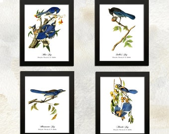 Choose or Four More of Any Bird Photography Images and Save Save 15/% on Set of Any Four Bird Prints Signed Fine Art Prints