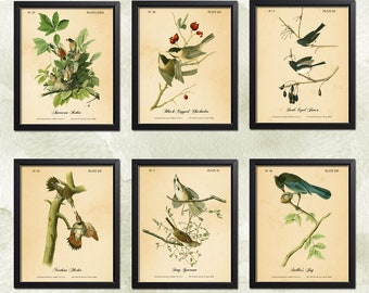 Northern Flicker Woodpecker Bird Poster Old Audubon Illustration AOB37