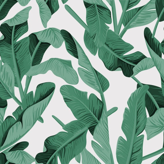 Banana Leaf Wallpaper Rainforest Tropical Green Leaves Etsy Bitter greens with sweet onions and sour cherries, grilled clams with spaghetti, prosciutto, and mixed… banana leaf wallpaper rainforest tropical green leaves wallpaper wall mural tropical palm leaves tropical plants 1216