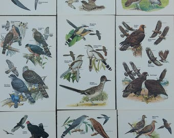 Vintage Bird Field Guide Plates, Set of Nine, Instant Gallery Wall
