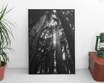 B&W Muir Woods, Black + White San Fransisco (Redwood Trees,Cali Adventure Photo,Travel Photo,Wall Art,Printable Art,Digital Prints Download)