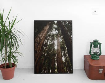 NEW Muir Woods, San Fransisco (Redwood Trees,Cali Adventure Photo,Travel Photos,Wall Art,Printable Art,Digital Prints,Digital Download)