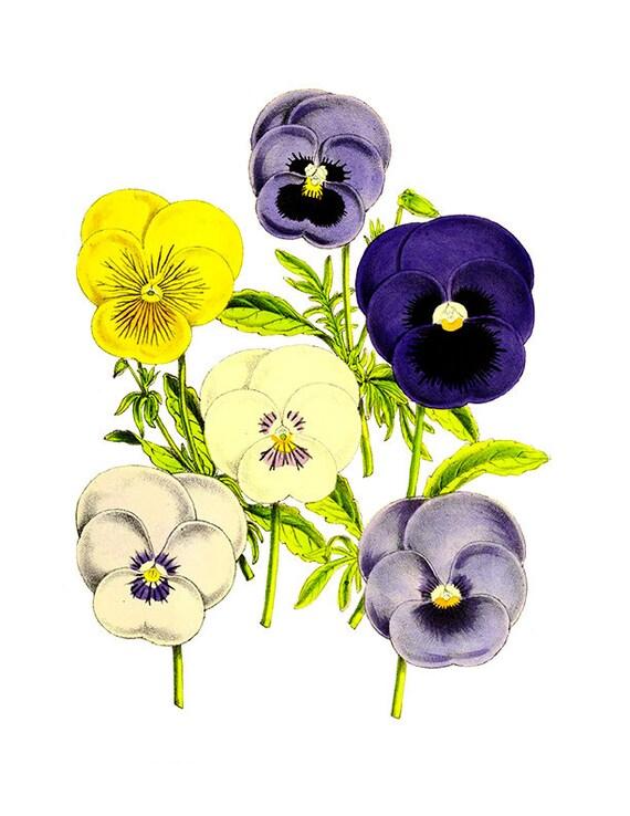 2f3c92adf24 Vintage Violas y pensamientos Imágenes Prediseñadas Imágenes