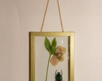 L'herbier entomologue #1