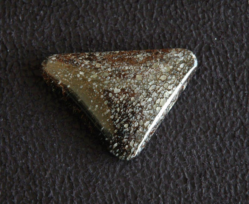 Rare Dino Bone Designer Cabochon C34