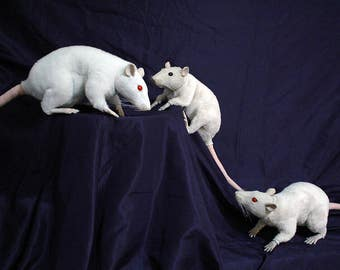 "Poseable art doll ""White Rat, Red eyes"", Ooak, unique design, full Hand made."