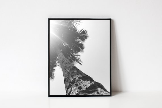 Photography Wall Art Black And White Photography Palm Tree Etsy