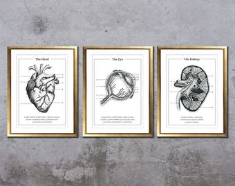 Set of 3 anatomic drawings, organ prints, medical pen drawings, human anatomy, anatomic art, medicine student gift