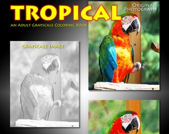 New Creations Coloring Book Series:  TROPICAL