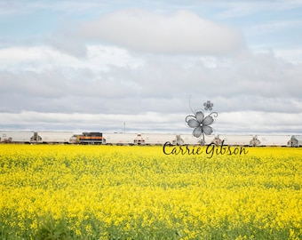 All 4 Canola fields