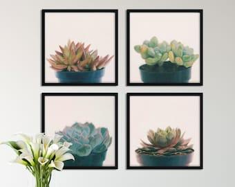 Set of 4 Succulent Downloadable Art, Photo Art, Minimalist Art, Digital Download Art, Apartment Decor, Zen Photo Art, Nature Photography