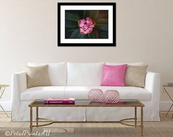 Rhododendron Bud Photographic Print, Digital Print, Printable Flower Art