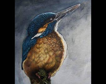 European Kingfisher [ Print ]