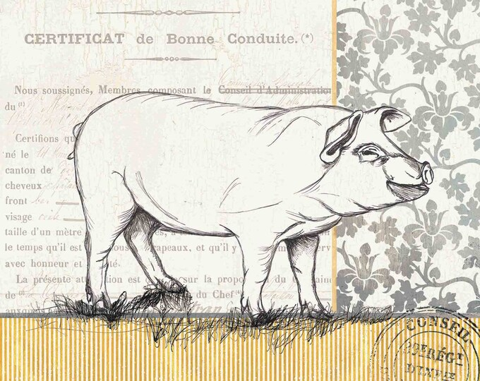 Canvas Print - Vintage Pig